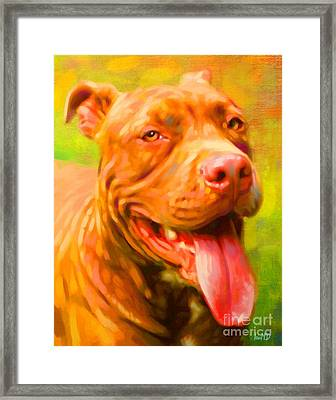 Pit Bull Portrait Framed Print by Iain McDonald
