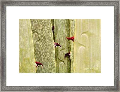 Puya Raimondii Leaf Patterns 4 Framed Print by James Brunker