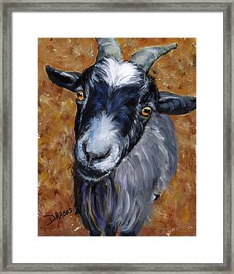 Pygmy Goat Looking Up Framed Print by Dottie Dracos