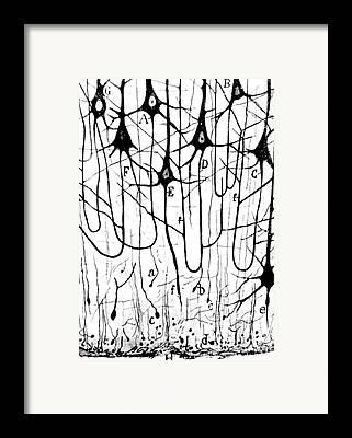 Neurons Framed Prints