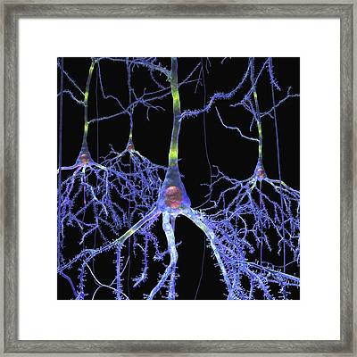 Pyramidal Cells In The Brain Framed Print by Russell Kightley