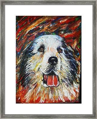 Pyrenean Mountain Dog Framed Print by Anastasis  Anastasi