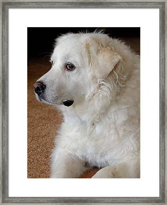 Pyrenees Portrait Framed Print by Scott Kingery