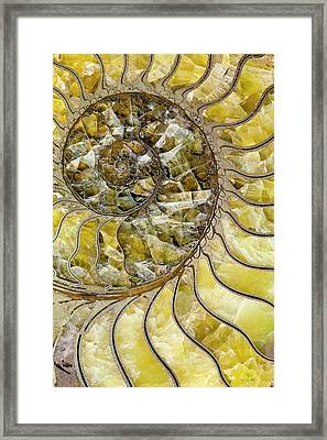 Pyrites Ammonite Spiral Calcite Crystals Framed Print by Paul D Stewart