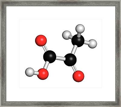 Pyruvic Acid Pyruvate Molecule Framed Print