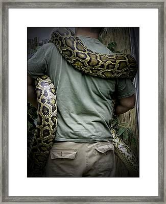 Python Boa Framed Print by LeeAnn McLaneGoetz McLaneGoetzStudioLLCcom