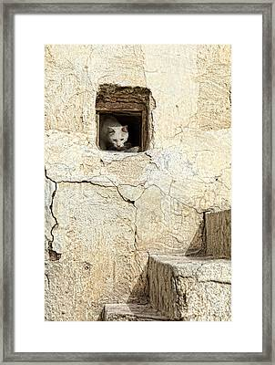 Qatari Alley Cat Framed Print by Paul Cowan