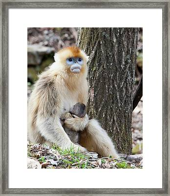Qinling Mountains, China, Female Golden Framed Print by Alice Garland