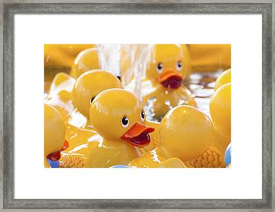 Quackers Framed Print by Caitlyn  Grasso