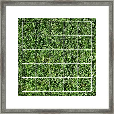 Quadrat On A Lawn Framed Print by Science Photo Library