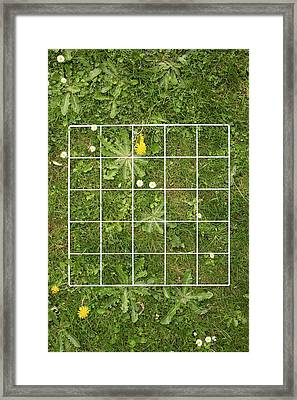 Quadrat On A Lawn With Weeds Framed Print by Science Photo Library