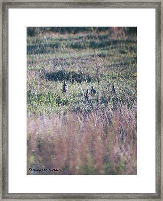 Framed Print featuring the photograph Quail Family On The Run by Belinda Lee