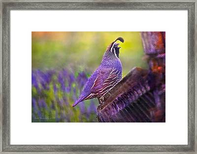 Quail In Lavender Framed Print