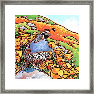 Quail Poppies Framed Print