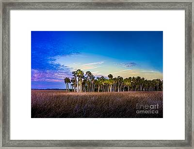 Quailty Time Framed Print by Marvin Spates