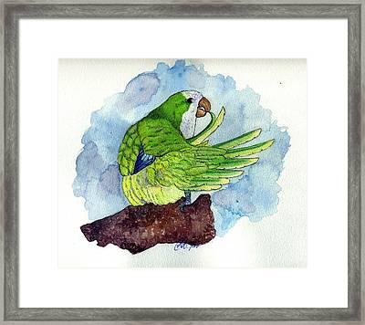 Quaker Parakeet Bird Portrait   Framed Print by Olde Time  Mercantile