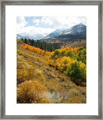 Quakies And Mountains Framed Print