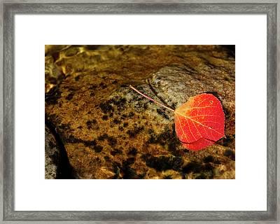 Quaking Aspen Leaf In Fall Colors Framed Print