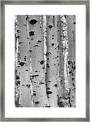 Quaking Aspen Zion National Park Framed Print