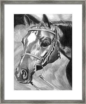 Quarter Horse Hunter Framed Print by Olde Time  Mercantile