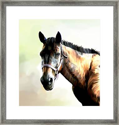 Quarter Horse Framed Print by Karen Sheltrown