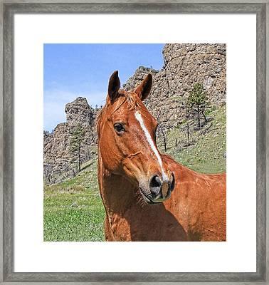 Quarter Horse Portrait Montana Framed Print