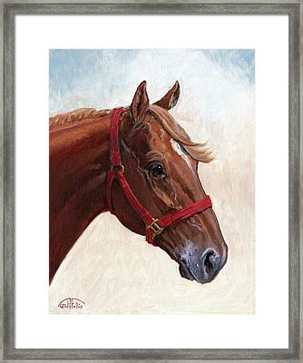 Quarter Horse Framed Print by Randy Follis