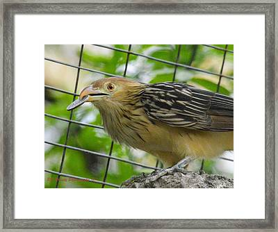 Quarter Of A Birdie Framed Print by PE Prunty