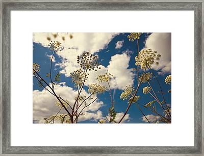 Queen Anne Lace And Sky I Framed Print by Jenny Rainbow