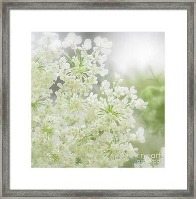 Queen  Anne Lace Framed Print by France Laliberte