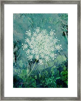 Queen Anne's Lace  Framed Print by Ann Powell