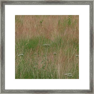 Framed Print featuring the photograph Queen Anne's Lace by Aurora Levins Morales