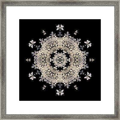 Queen Anne's Lace Flower Mandala Framed Print by David J Bookbinder