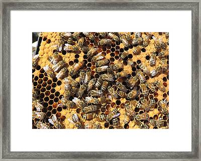 Queen Bee And Her Attendants Framed Print