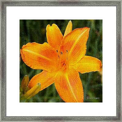 Queen For The Day Framed Print by Terri Harper