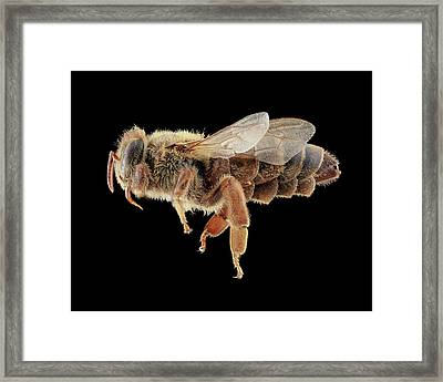 Queen Honeybee Framed Print by Us Geological Survey