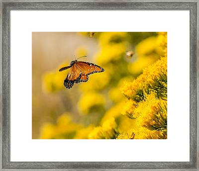 Queen In Flight Framed Print