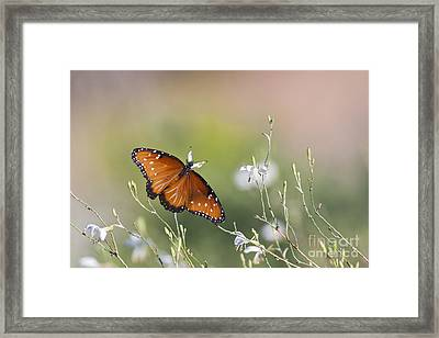 Framed Print featuring the photograph Queen In Morning Light by Ruth Jolly