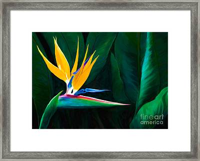 Painted Queen Of The Garden Bird Of Paradise Flower Framed Print by Sherry  Curry