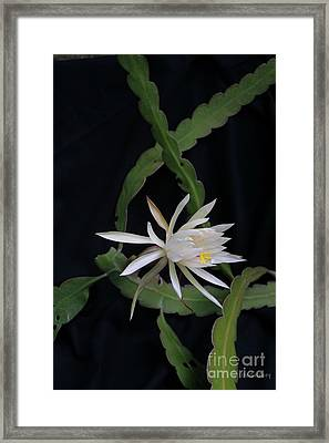 Framed Print featuring the photograph Queen Of The Night by Dodie Ulery
