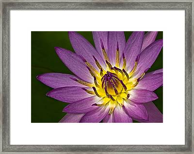 Queen Of The Pond Framed Print