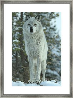 Queen Of The Rockies Framed Print
