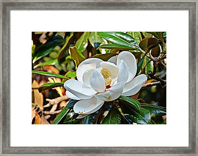 Queen Of The South Framed Print by Linda Brown