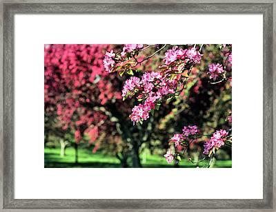 Queens Botanical Garden Framed Print by JC Findley