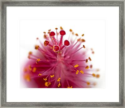 Queens Crown Framed Print by Camille Lopez