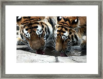 Quench The Thirst... Framed Print