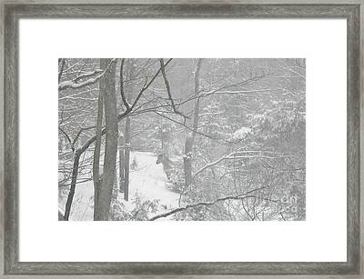 Querida In The Snow Storm Framed Print by Patricia Keller