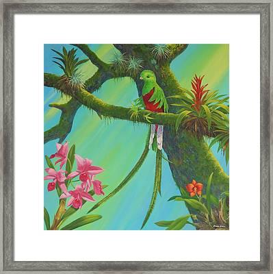 Quetzal Framed Print