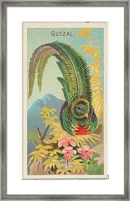 Quetzal, From The Birds Of The Tropics Framed Print