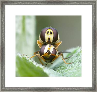 Quick Hide Jeff Cover Your Eyes Framed Print